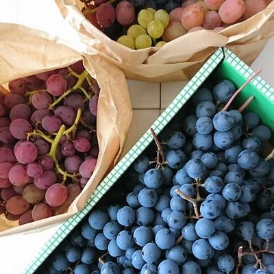 色とりどりの葡萄が箱や袋に入ってます!
