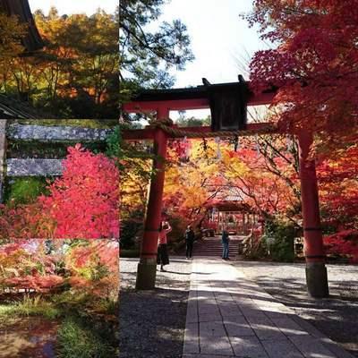 神社の鳥居と紅葉の風景