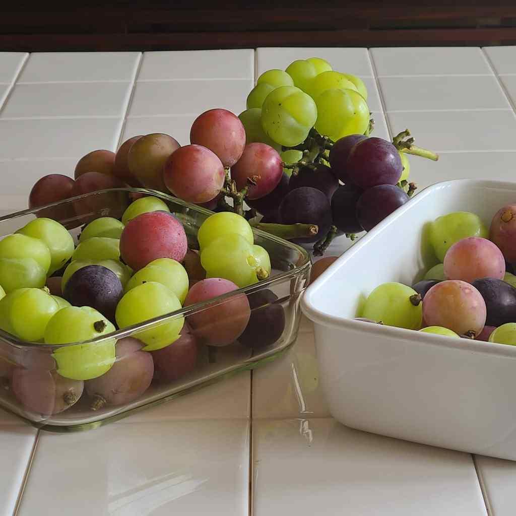 房からほどき容器に入った3種の葡萄たち