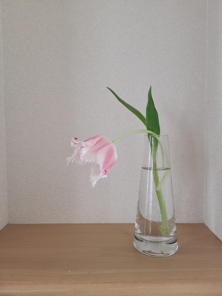 ガラスの花器に一輪のチューリップが活けてあります。