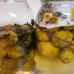 発酵し始めた瓶の中の茶梅たち
