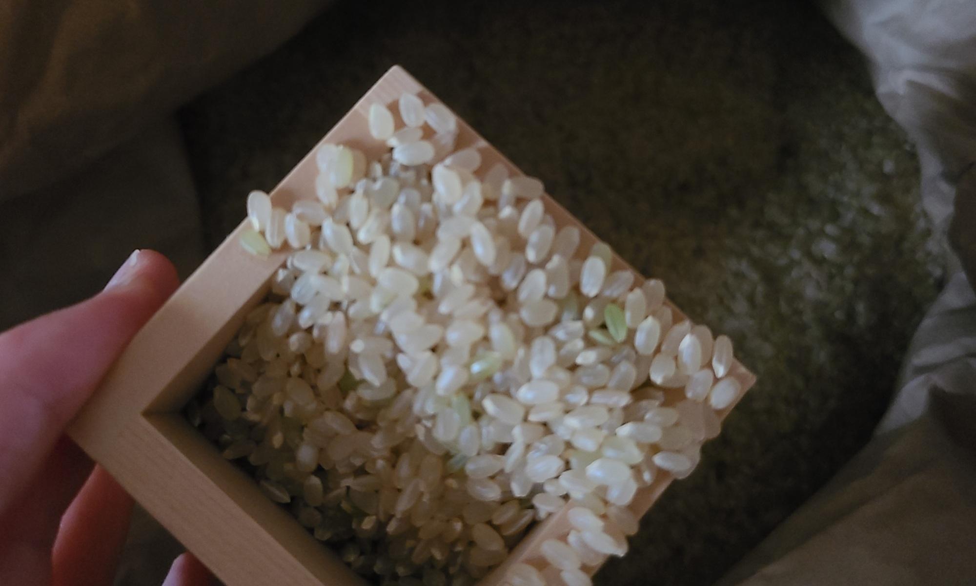 米袋から升を使って新米をすくっている様