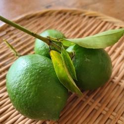 笊の上に葉付きのレモン3コ